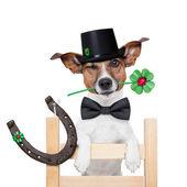 Chimney sweeper dog — Stock Photo