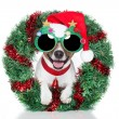 Xmas dog — Stock Photo