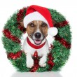Xmas dog — Stock Photo #12178403
