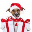 Christmas dog - Stock Photo
