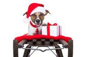 Christmas dog on sleigh — Stock Photo
