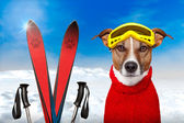 Neige chien hiver — Photo