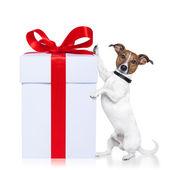 Jul hund med nuvarande — Stockfoto