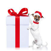 Christmas dog santa — Stock Photo