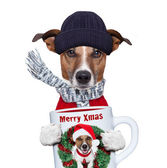 Christmas dog with cup — Stock Photo
