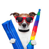 Dog summer holidays — Stock Photo