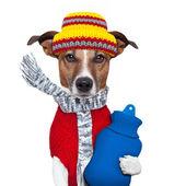 Vinter hund halsduk och hatt — Stockfoto