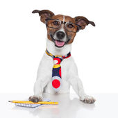 Business dog typewriter — Stock fotografie