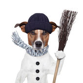 Rain broom dog winter — Stock Photo