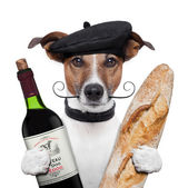 French dog wine baguete beret — Stock Photo