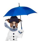 Rain umbrella dog — Stock Photo