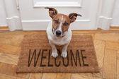 добро пожаловать домой собака — Стоковое фото