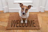 Dog welcome home — Stock Photo