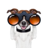 Binoculars searching looking observing dog — Stok fotoğraf