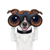 Dürbün gözlemleyerek köpek arıyor — Stok fotoğraf