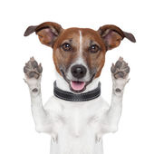 Hello goodbye high five dog — Stock Photo
