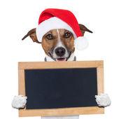 Christmas banner placeholder dog — Stock Photo