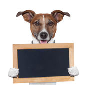 Placeholder banner dog — Stock Photo