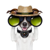 Binoculars safari compass dog watching — Stock Photo