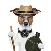 Hike compass hat dog — Stock Photo