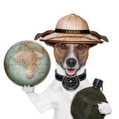 Travel globe compass dog safari — Stock Photo