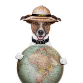 Travel globe compass dog safari explorer — Stock Photo