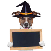 Halloween placeholder banner dog — Stock Photo