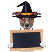 Halloween placeholder banner dog — Stock Photo