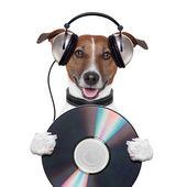 Cachorro de cd música fone de ouvido — Foto Stock
