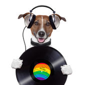 Music headphone vinyl record dog — Stock Photo