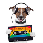 Music cassette tape headphone dog — Stock Photo