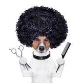 Friseur schere kamm hund — Stockfoto