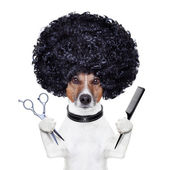 发型师剪刀梳子狗 — 图库照片