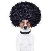 Afro haar hond grappig kijken — Stockfoto