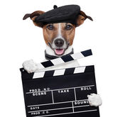 Movie clapper board director dog — Stock Photo