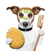 Wellness-spa wassen spons hond — Stockfoto