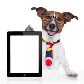 Business dog tablet pc ebook — Stock Photo