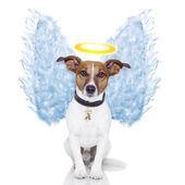 Angel dog feather wings aura nimbus — Stock Photo