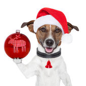 Santa dog with christmas ball on paw — Stock Photo