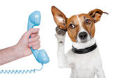 Dog on the phone male hand — Stok fotoğraf