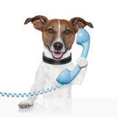Cão em falar ao telefone — Foto Stock