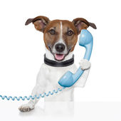 Dog on the phone talking — Stock Photo