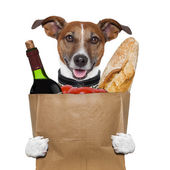 Grocery bag dog wine tomatoes bread — Stock Photo