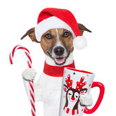 Xmas dog with cup and candy cane — Stock Photo