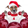 Christmas dog with santa hat and balls — Stock Photo