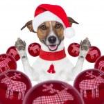 Christmas dog with santa hat and balls — Stock Photo