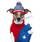 Sick ill cold dog — Stock Photo