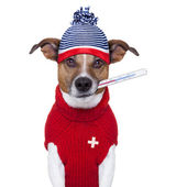 Sick ill cold dog with fever — Stock Photo