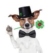 Bacayı süpürmek köpek — Stok fotoğraf
