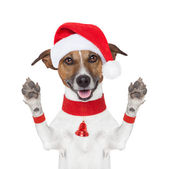 Hello goodbye christmas dog — Stock Photo